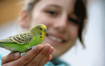 girl and budgie